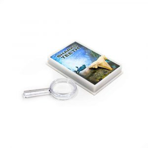 Shark tooth with magnifying glass