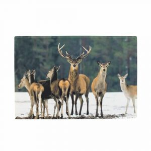 Doormat Snow Flock of Deer (75 x 50 cm)